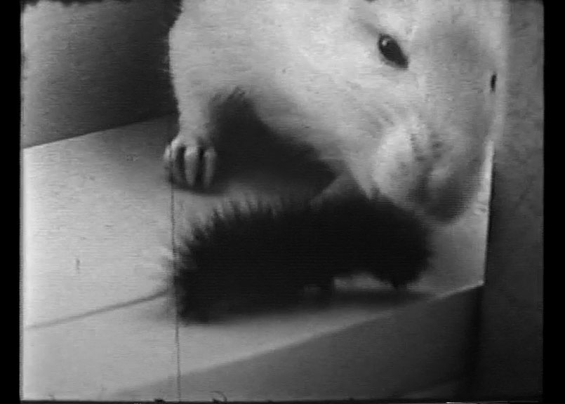 Still image from Steinbeck's home movies, propably shot at Doc's lab, the setting of scenes from several historic films.