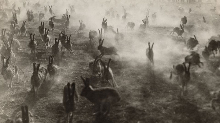 Image of jackrabbits fleeing Dust Bowl conditions described in The Grapes of Wrath