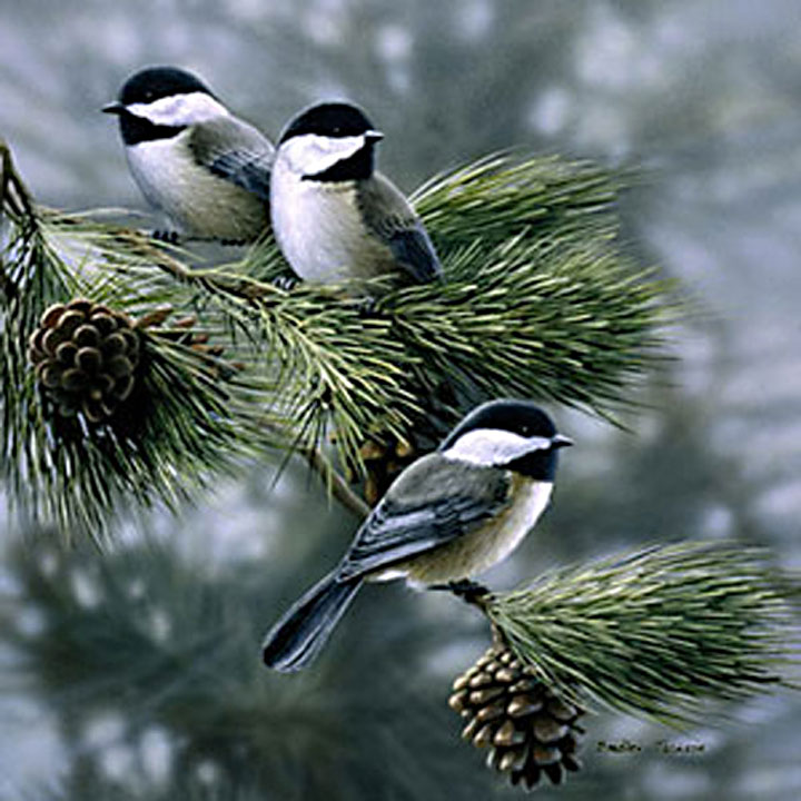 Image of three chickadees