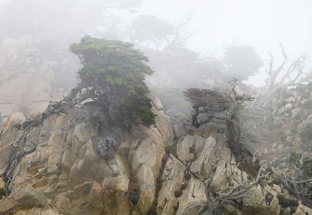 Image of Point Lobos fog photo by Charles Cramer
